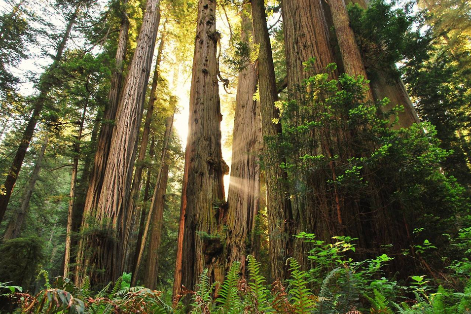Redwood national park